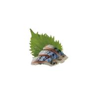 SA4 Saba  (maquereau)
